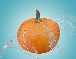 Aquatics_Pumpkin Patch Splash